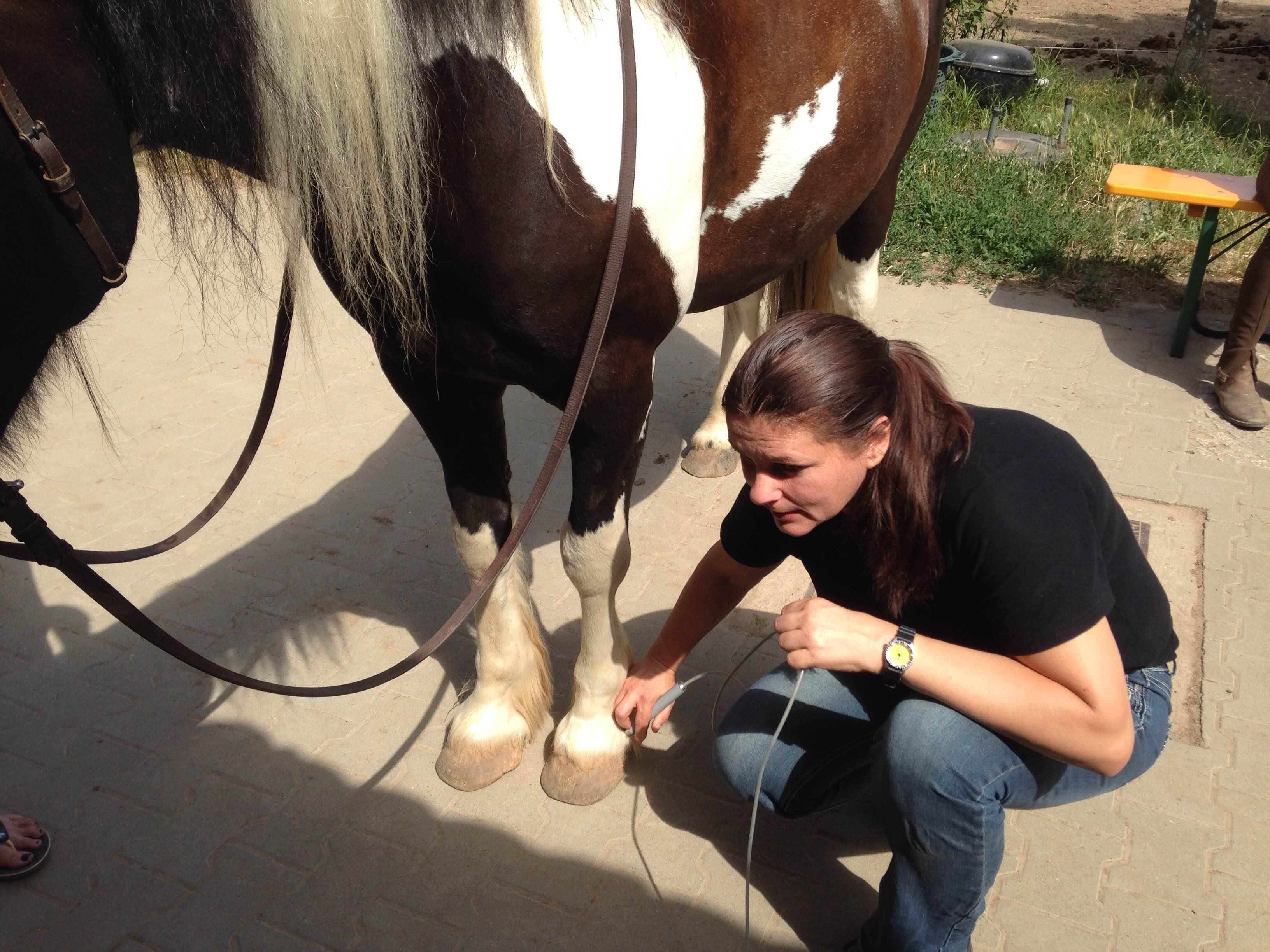 pferd immunsystem stärken